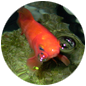 Jumper Jungle icon